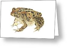 American Toad Greeting Card