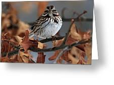 American Tree Sparrow No 2 Greeting Card