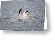 American White Pelican Landing 3 Greeting Card