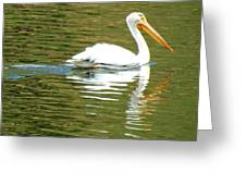 American White Pelican On A Lake Greeting Card