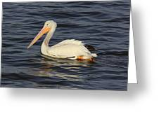 American White Pelican Paddling Greeting Card