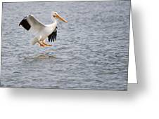 American White Pelican Water Landing 2 Greeting Card
