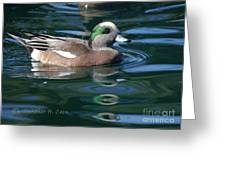 American Widgeon Duck Greeting Card