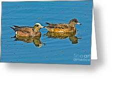 American Wigeon Pair Swimming Greeting Card