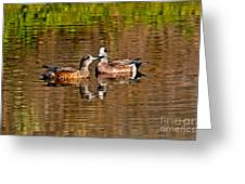 American Wigeon Pair Together Greeting Card