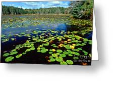 Ames Pond Greeting Card