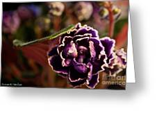 Amethyst African Violet Greeting Card