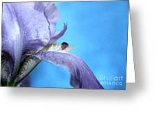 Amethyst Iris Greeting Card