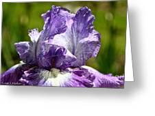 Amethyst Iris Greeting Card
