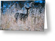 Amid The Frosty Wheat Greeting Card