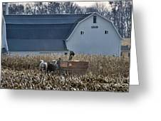 Amish Corn Picking And 1919 Barn Greeting Card