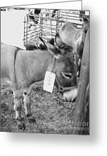 Amish Donkey At Action Greeting Card