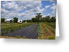 Amish Farm And Garden Greeting Card