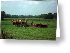 Amish Field Work Greeting Card