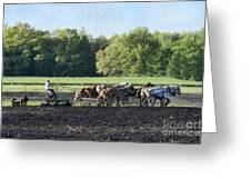 Amish Plowing Field Greeting Card