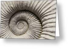 Ammonites Fossil Shell Greeting Card