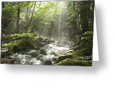 Ammonoosuc Ravine Trail - White Mountains Nh Usa Greeting Card