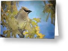 Among The Catkins Greeting Card