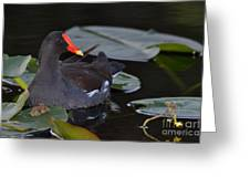 Among The Lilypads  Greeting Card