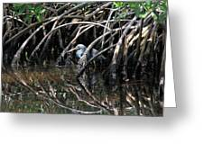 Among The Mangrove Roots Greeting Card