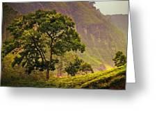 Among The Mountains And Tea Plantations. Nuwara Eliya. Sri Lanka Greeting Card
