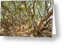 Among The Trees - The Mysterious Trees Of The Los Osos Oak Reserve Greeting Card