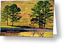 Among The Trees Greeting Card