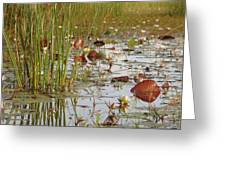 Among The Waterlillies 2 Greeting Card