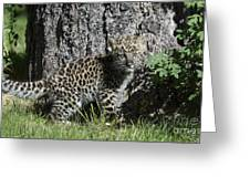 Amur Leopard Cub Antics Greeting Card