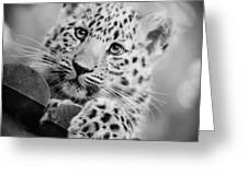 Amur Leopard Cub Portrait Greeting Card