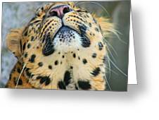 Amure Leopard Greeting Card