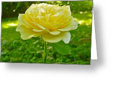 Amy's Texas Yellow Rose Greeting Card
