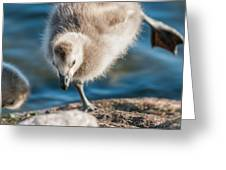An Acrobatic Goose Greeting Card