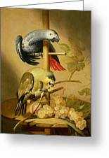 An African Grey And An Orange Winged Amazon Parrot On  A Perch With Grapes Greeting Card