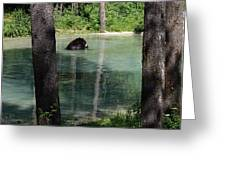 Bear In The Afternoon Greeting Card