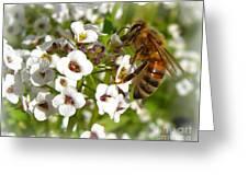An Alyssum Meal Greeting Card