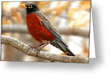 An American Male Robin Greeting Card