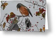An American Robin Remembers Greeting Card