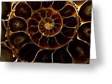 An Ancient Ammonite Pattern  Greeting Card