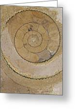 An Ancient Ammonite Pattern Vi Greeting Card