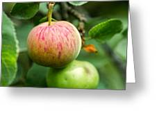 An Apple - Featured 3 Greeting Card