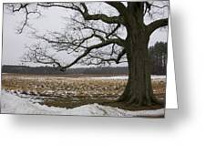 An Appleton Tree And Field In Winter Greeting Card