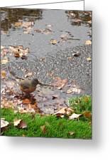 An Autumn Bath Greeting Card