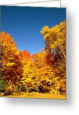 An Autumn Of Gold Greeting Card