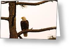 An Eagle Day Dreaming Greeting Card