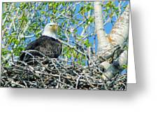 An Eagle In Its Nest  Greeting Card