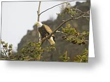 An Eagle In The Spring Greeting Card