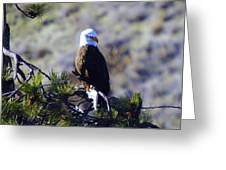 An Eagle In The Sun Greeting Card