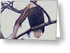 An Eagle Resting  Greeting Card