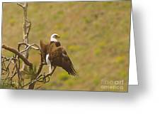 An Eagle Stretching Its Wings Greeting Card